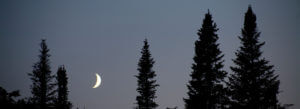 Header-Trees-with-moon